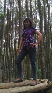 hutan pinus 2